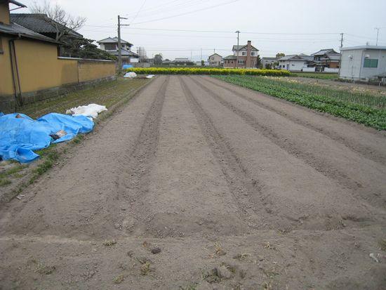 みのる農園:レーキ<b>整地</b>